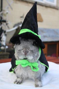 House Rabbit Halloween Photo Contest - 2012 | I Love My House Rabbit