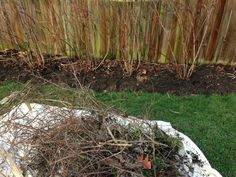 Use this method to prune blueberry bushes so you can maximize fruit set and improve production. Growing Tomatoes, Growing Herbs, Garden Soil, Edible Garden, Organic Gardening, Gardening Tips, Vegetable Gardening, Highbush Blueberry, Organic Weed Control