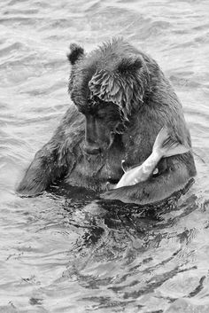 Fishing | black  white | bear | dinner | lake | animals | fun | nature photo |