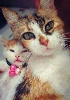 calico mom and baby