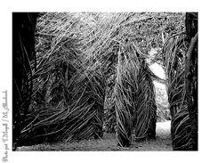 TREVAREZ CASTLE & VEGETAL    TREVAREZ VEGETAL    Dans le jardin du château de Trévarez. : la tortue de Patrick Dougherty.  In the garden of Trevarez castle: Patrick Dougherty's turtle.
