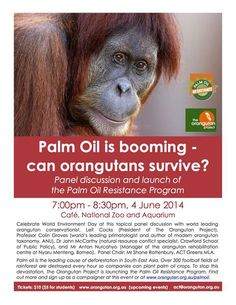 Palm Oil is booming - can orangutans survive?