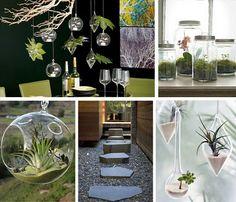 27 Best Hanging Glass Terrariums Images Terrariums Hanging Glass