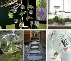 these glass canisters from Ikea are the perfect contemporary receptacles for housing some low maintenance greenery