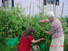 Balcony Vegetable Garden Ideas