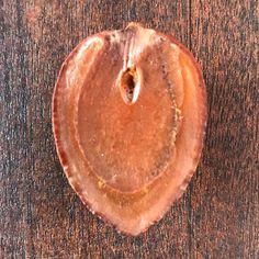 #semente #semilla #seeds #amazonsecretsspa #amazonsecrets #energiapunta #sheilafarah https://www.instagram.com/amazonsecrets/ http://amazonsecretsspa.com/ www.amazonsecretsspa.com