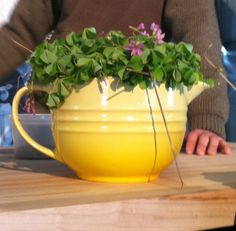 pretty! Im obsessed with Le Creuset in Soliel :)