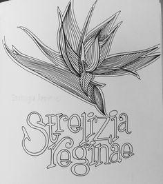 Strelizia bird of paradise in pen and ink.