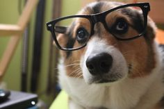 You didn't do your homework? www.focalglasses.com Best Vision in The World!