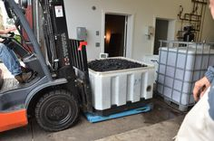 At the winery every tote is weighed in before it is sorted.