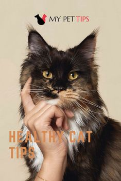 Keeping your cat healthy, groomed, and well fed is important. Take a look at these easy tips for maintaining your cat and you're sure to have a lovely # catallergies # kitty Flea Treatment, Pet Tips, Fleas, Cat Lovers, Kitty, Cats, Healthy, Animals, Cuddle Cat