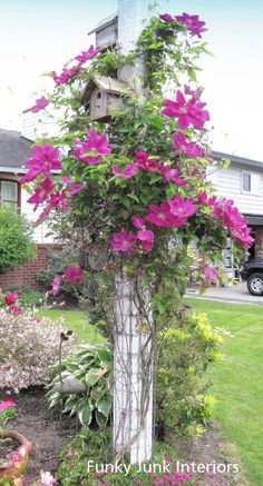 Clematis on a birdhouse post. Nice!just bought one of theses plants - love it