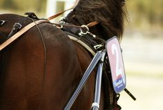 Behind the scene's, harness racing. Harness Racing, Horse Pictures, Behind The Scenes, Horses, Bags, Handbags, Pictures Of Horses, Dime Bags, Horse