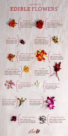 Guide to Edible Flowers - Learn how to find and use beautiful and delicious edible flowers in recipes, cocktails, and more.