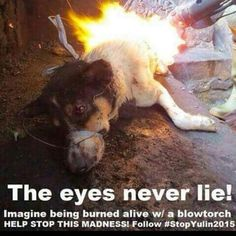 This is sooo heartbreaking. And this makes me want to hug my dog .. as in right now. PLEASE help #STOPYulin2015 and sign the petition. :(