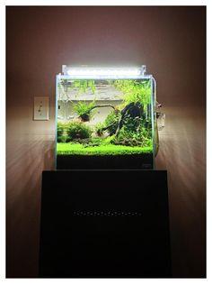 """ADA Cube Garden 30cm. (12""""x12""""x12"""")"""