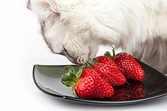 Find out what's the best food to keep your cat happy and healthy: http://www.primepetinsurance.com.au/blog/whats-the-best-food-to-keep-your-cat-happy-and-healthy/