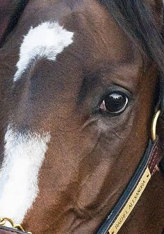 Thinking of Rachel.  Hang in there, girl.  <3 Rachel Alexandra  (by connie224)
