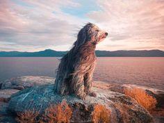 Perro playa viento