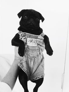 Dog in overalls