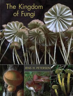 The Kingdom of Fungi by Jens H. Petersen - a beautiful guide to the fungus among us, illustrated with hundreds of gorgeous color photographs.