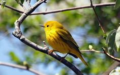 """""""the world is filled with yellow canaries with gray on their wings. the pity is that so precious few of them have learned to sing."""" 