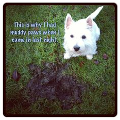 """""""This is why I had muddy paws when I came in last night."""" ~ Dog Shaming shame"""