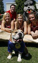 Victor E. Dog. Is Fresno State's live mascot!
