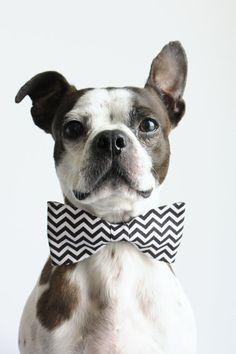 Chevron Dog tie