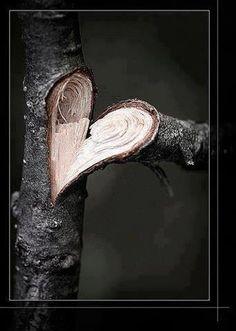 the tree has a braking heart.:(