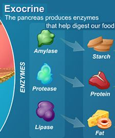 Exocrine Pancreatic Insufficiency, often called pancreatic insufficiency, is the inability of your digestive system to break down and properly digest foods ... / Digestion