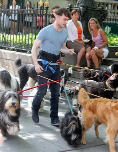 Daniel Radcliff's dog forcefield