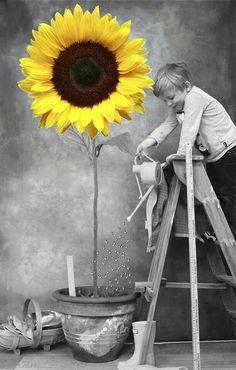 We see in color, and we think in black and white./Vediamo a colori e pensiamo in bianco e nero. Sunflower Pictures, Sunflower Art, Sunflower Quotes, Color Splash, Color Pop, Splash Art, Splash Photography, Black And White Photography, Colour Photography