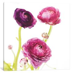 "Three Posts Spring Ranunculus I Graphic Art on Wrapped Canvas Size: 12"" H x 12"" W x 1.5"" D"