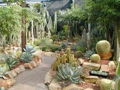 How to Plant Cactus Landscapes | ... formsof succulents plants from across the world are represented here