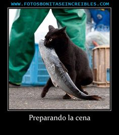 Picture # 190 collection funny animals pictures pics) for December 2015 – Funny Pictures, Quotes, Pics, Photos, Images and Very Cute animals. Crazy Cat Lady, Crazy Cats, I Love Cats, Cute Cats, Cat Fun, Animals And Pets, Funny Animals, Cute Animals, Photo Chat