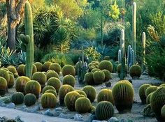 The Huntington Library, Museum and Gardens cactus garden in San Marino CA
