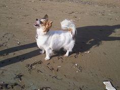 Milù in the beach