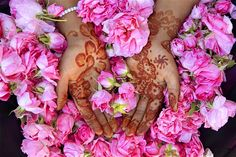 Valley of the Roses: discover Morocco's floral festival – Lonely Planet Moroccan Hammam, Hammam Massage, Mehndi, African House, Rose Queen, Damask Rose, Growing Roses, Trumpets, Floral Arrangements