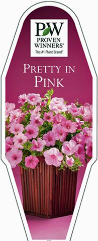 Recipes for creating your favorite PINK annual combinations