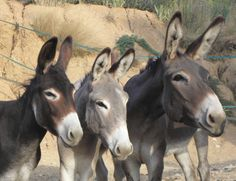 Donkeys. Each one different from the other.