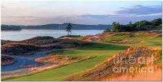 """North by Northwest"".....Chambers Bay Golf Course's ""The Lone Fir"" at twilight. Taken in University Place, Washington."