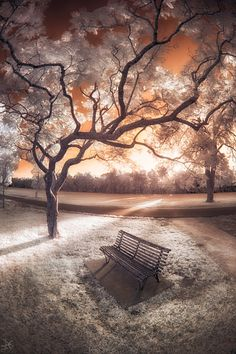 Infrared: The Final Hours, Parramatta Park