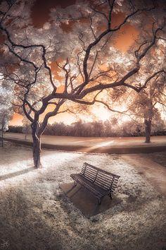 Infrared: The Final Hours, Parramatta Park