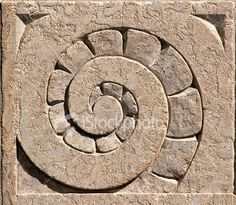 Ammonite spiral fossil stone...would be a great mosaic center element