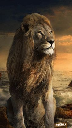 The Lion of Judah; Remarkable Looking Africa Male Lion. Beautiful Cats, Animals Beautiful, Chat Lion, Animals And Pets, Cute Animals, Lion And Lamb, Gato Grande, Lion Love, Lion Wallpaper