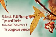 Splendid Fall Photography Tips and Tricks to Make The Most Of This Gorgeous Season