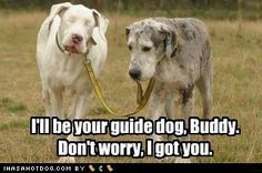 Doggy guide