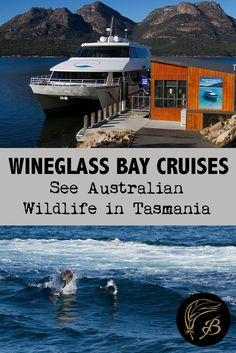 See an alternative view of one of Australia's best beaches with Wineglass Bay Cruises. Good food, lovely scenery and marine life abounds. Visit Australia, Australia Travel, Australia Holidays, Wanderlust Travel, Asia Travel, Cruise Travel, Best Travel Guides, Travel Tips, Travel Destinations