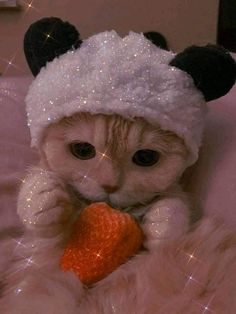 Funny Cute Cats, Cute Baby Cats, Cute Cats And Kittens, Cute Little Animals, Cute Funny Animals, Kittens Cutest, Cute Cats Photos, Cute Animal Photos, Cute Pictures